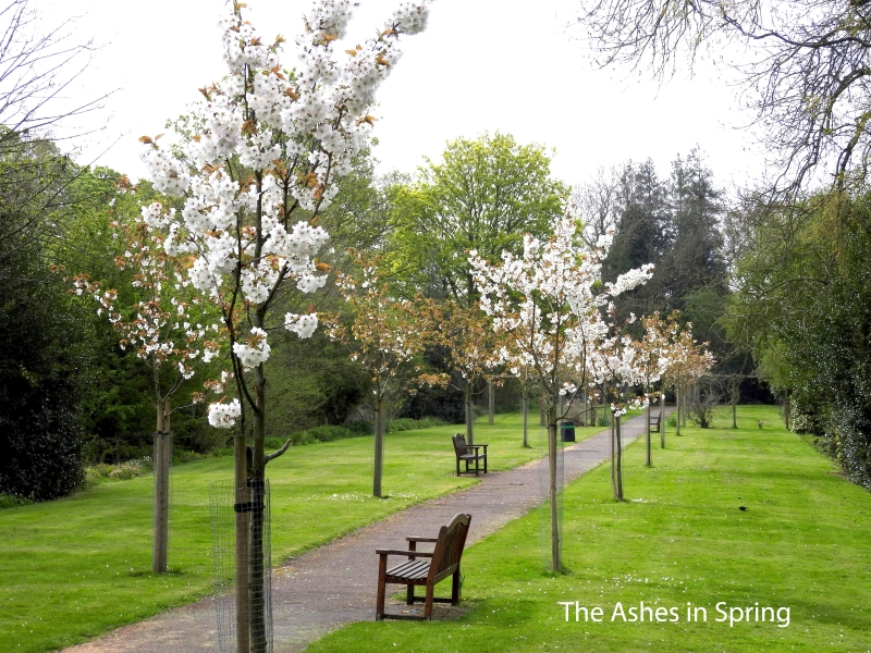 The Ashes in Spring